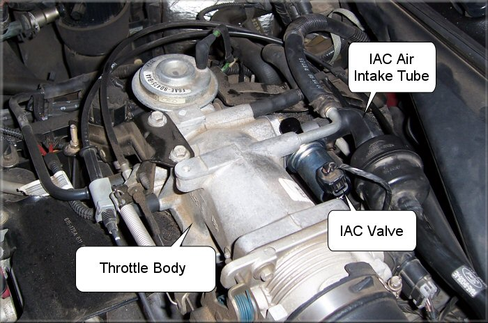 the electrical connector attached to the idle air control (IAC) valve